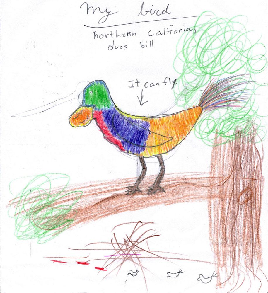 draw your own bird pacifica garden