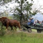 Horse-drawn Cart Rides