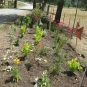 Southern Entry Plantings - June 2012