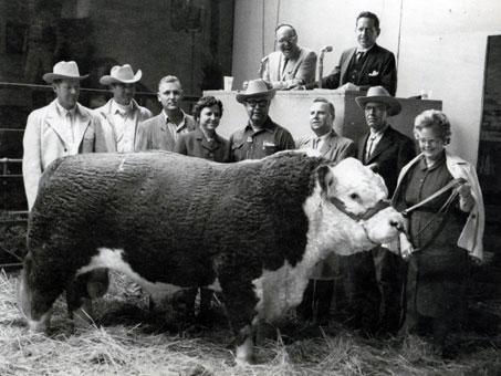 Bull - circa 1960