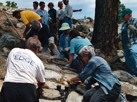 Planting the Rock Garden