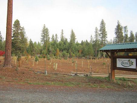 New Plantings - November 2011